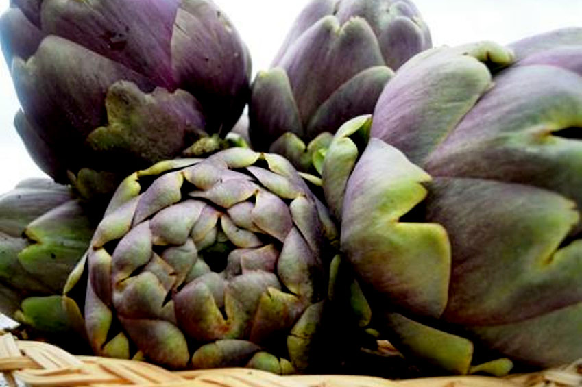 Artichokes festival | italycreative.it