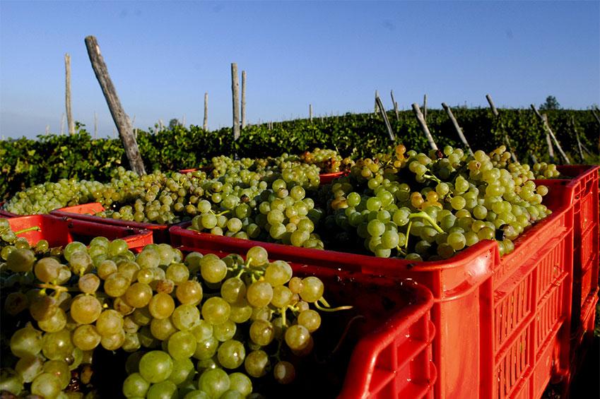 Langhe: food, wine, relax | italycreative.it