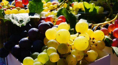 wine-food-sommelier-7-italycreative
