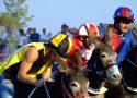 MARCH | Donkey palio Siena in Italy | italycreative.it